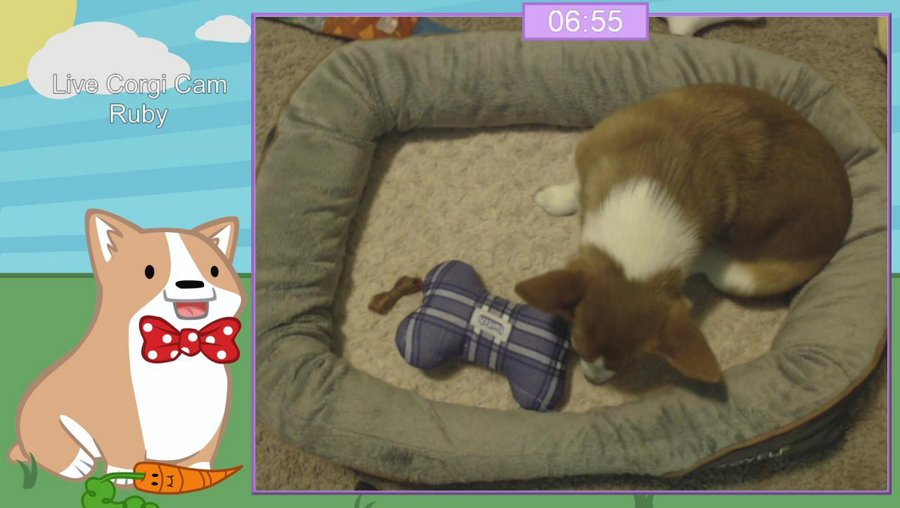 [PC] Doge smashes big monsters! Streaming for a bit before doing a sealed MTG event today!